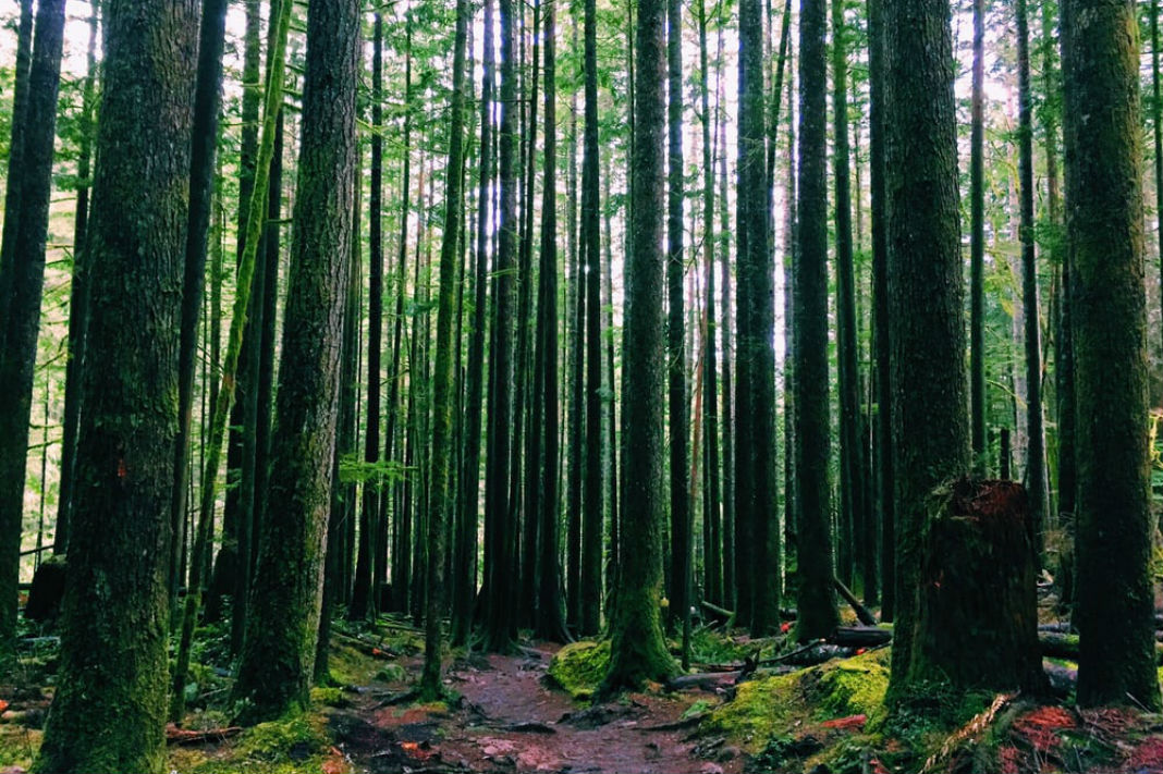 twin-falls-trail-Seattle Fitness Guide